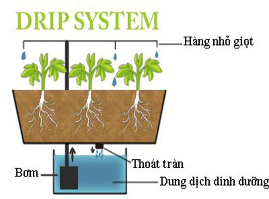 Image result for các hệ thống thủy canh