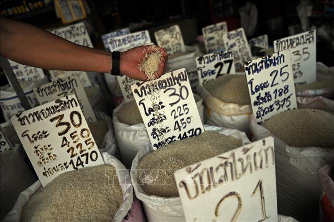 Giá lúa gạo Covid 19